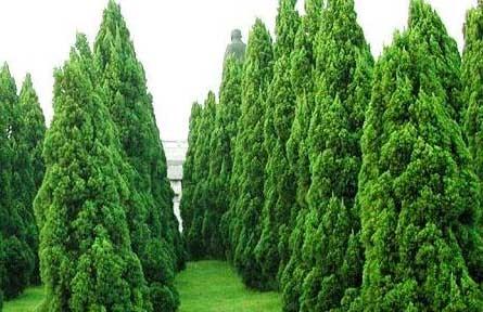 7月起施行《山东省古树名木保护办法》