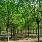 滨州市惠民枫景源绿化工程有限公司