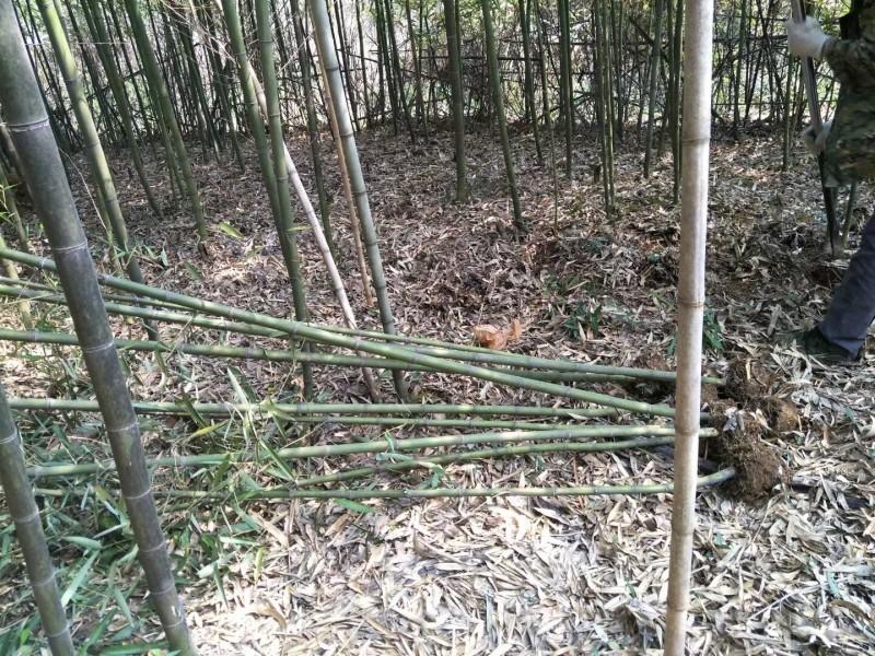 钢竹2-3公分